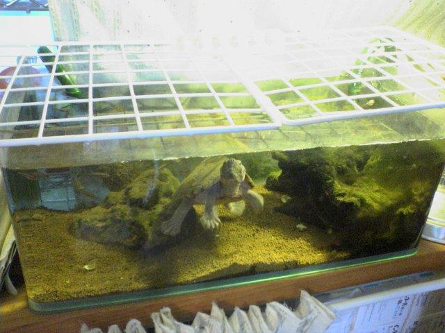 カブトニオイガメの飼育環境