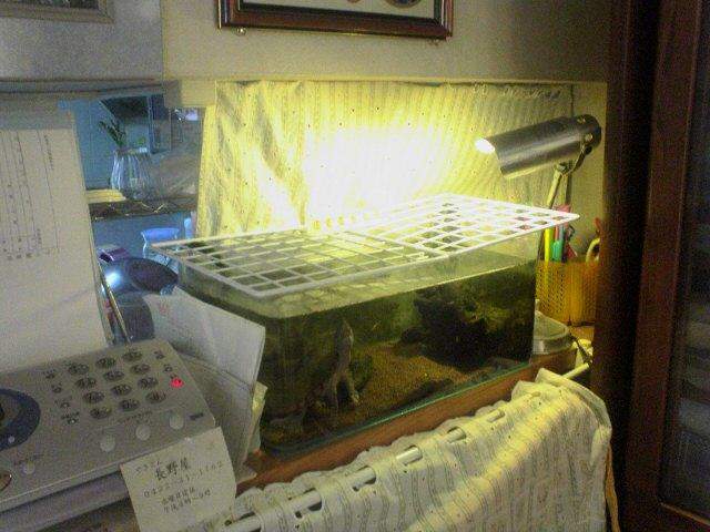 カブトニオイガメの飼育ケース